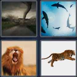 4-pics-1-word-9-letters-ferocious