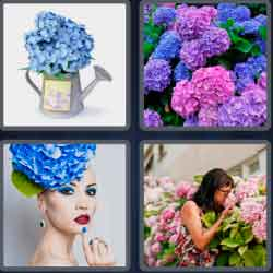 4-pics-1-word-9-letters-hydrangea