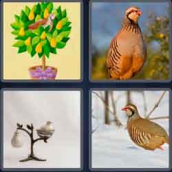 4 Pics 1 Word 9 Letters Partridge