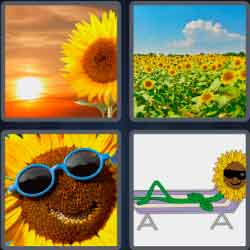 4 pics 1 word yellow flowers